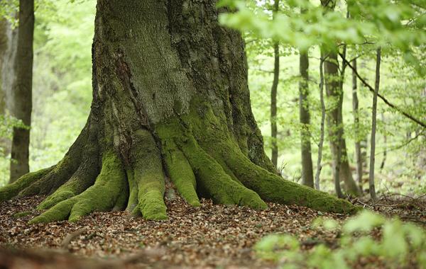 Bäume binden CO2